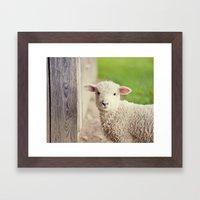 Little Lamb I Framed Art Print
