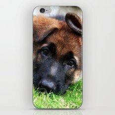 Playful Puppy. iPhone & iPod Skin