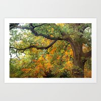 Autumn Warmth Art Print