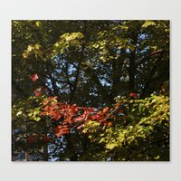The Leaves Were Smiling … Canvas Print