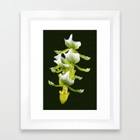 Green Orchid Framed Art Print