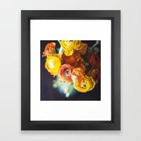 ranuculus Framed Art Print