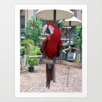 Macaw I Art Print