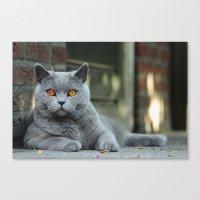 Diesel The Cat ! Canvas Print