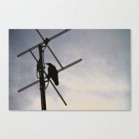 Ravens Perch Canvas Print