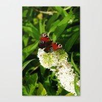 Vlinder Canvas Print