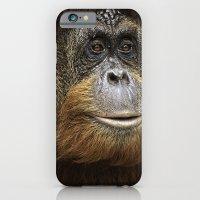 Orangutan Portrait iPhone 6 Slim Case
