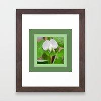 White Pea Blossom Framed Art Print