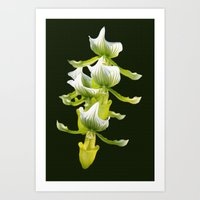Green Orchid Art Print