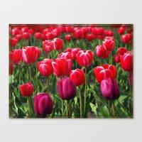 Tulip Love Canvas Print