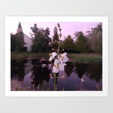 reflective pond Art Print