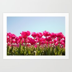 Tulips in Bloom! Art Print