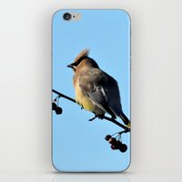 Waxwing on a Winter's Day iPhone & iPod Skin