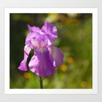 Iris 3109 Art Print