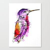 Fuchsia Hummingbird Canvas Print