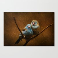 Male and Female Cordon Bleu Canaries Canvas Print