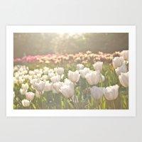 Tulips sunbathed Art Print