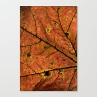 Fall Leaf III Canvas Print