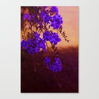 Chase Away The Blues Canvas Print