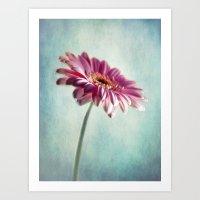 A Shade Of Pink Art Print