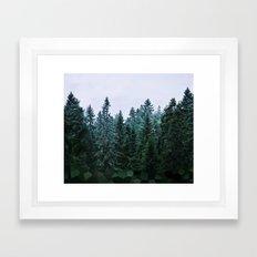Firs CVEL Framed Art Print