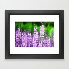 Salvia Framed Art Print
