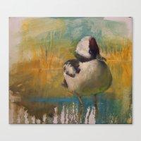 Ruddy Duck (Oxyura Jamai… Canvas Print