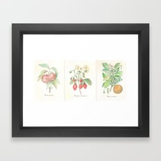 Vintage Botanical Fruit Framed Art Print