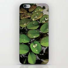 Mini Water Lilies and Water Bug iPhone & iPod Skin