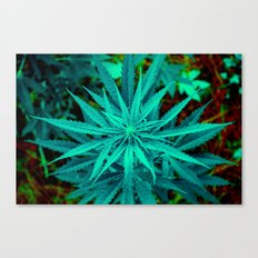 Twisted Frosty Weed Canvas Print