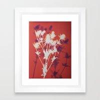 Photogram - Seaholly in Red Framed Art Print