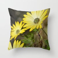 Cape Daisies 2 Throw Pillow