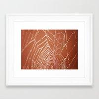 Spider Web Framed Art Print