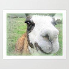 Friendly alpaca Art Print
