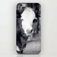Little Cow iPhone & iPod Skin