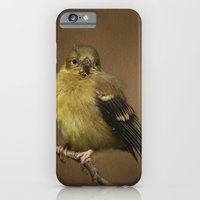 Baby Female Goldfinch iPhone 6 Slim Case