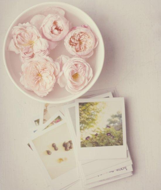 Roses And Polaroids Art Print