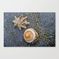 shell duo Canvas Print