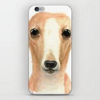 Rex iPhone & iPod Skin