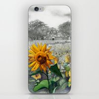 girasoli iPhone & iPod Skin