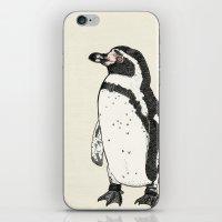 Humboldt Penguin iPhone & iPod Skin