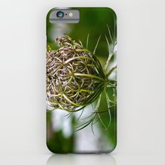 Wild Carrot iPhone 6 Slim Case