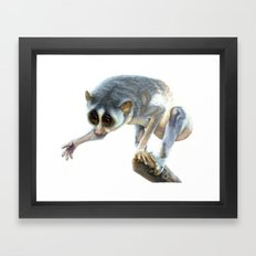 Slender Loris Framed Art Print