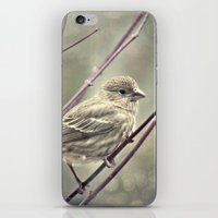 House Finch _Carpodacus … iPhone & iPod Skin