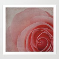 Sweet Roses Art Print
