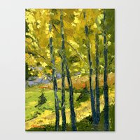 Backlit Aspens Canvas Print