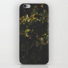 Foliage iPhone & iPod Skin