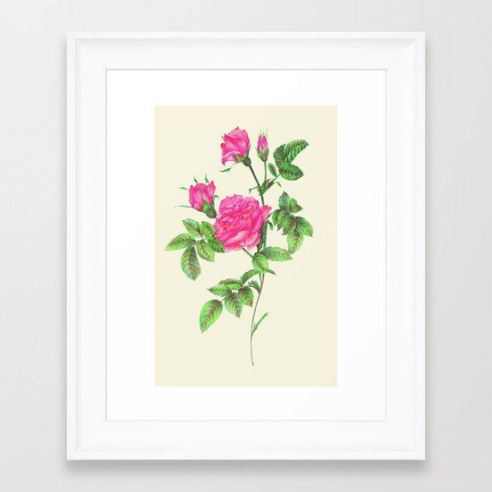 Ballpoint Pen, Redouté's Roses Framed Art Print