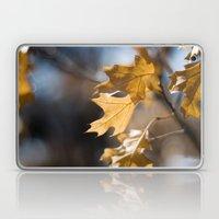 Winter Oak Laptop & iPad Skin