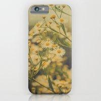 Daisy Fleabane Botanical iPhone 6 Slim Case